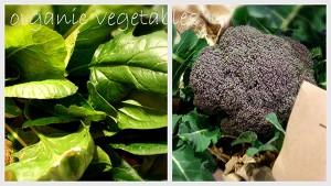 20141220本郷台野菜リサイズ